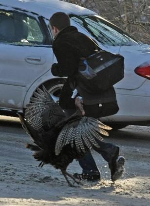 rizer_turkey trot10_met